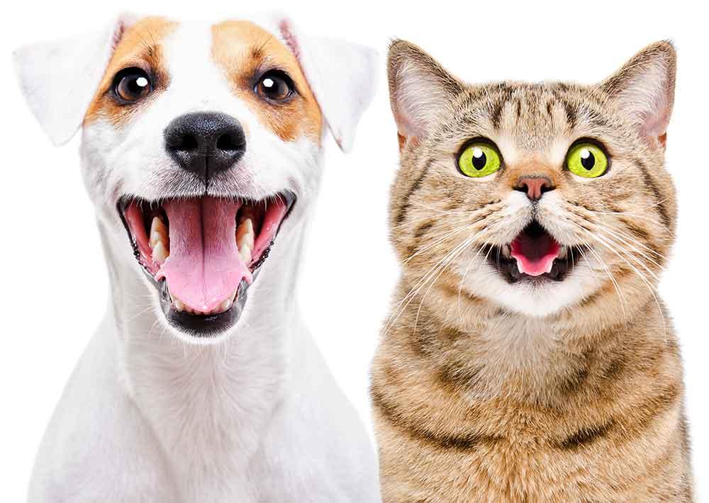 chien-chat-kalina-heureux